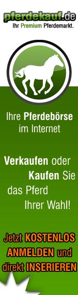 Pferde Pferdemarkt Pferdekauf-Online
